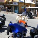 osly w miasteczku