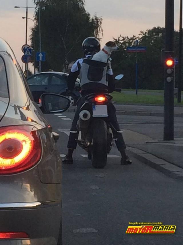 pies na motocyklu 2