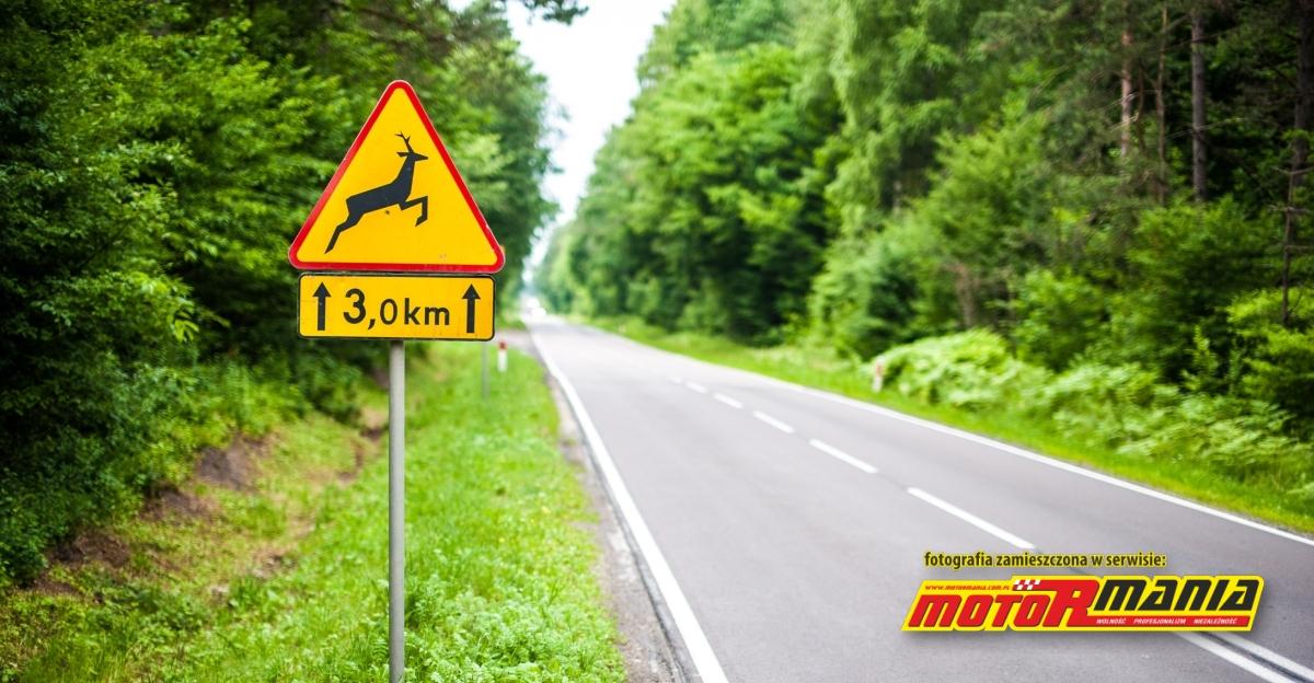 znak A18b - Uwaga dzikie zwierzeta - fot Torrest-Art_pl